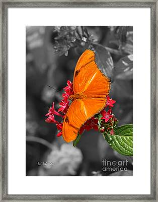 Framed Print featuring the photograph Butterfly Garden 16 - Julia Heliconian by E B Schmidt