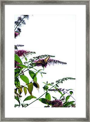 Butterfly Garden II Framed Print by Coralyn Klubnick Simone