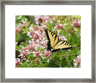 Framed Print featuring the photograph Butterfly Haven by Julie Andel