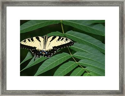 Butterfly Framed Print by Heather Green