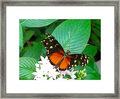Butterfly House  Framed Print