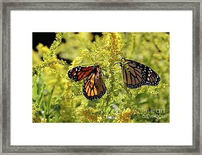 Butterfly In Fall  Framed Print