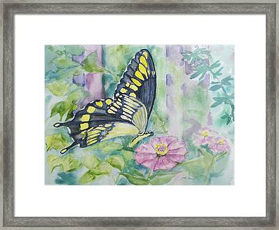 Butterfly In My Garden Framed Print by Judy Loper