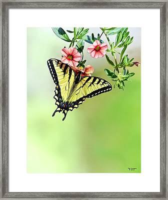 Butterfly In My Garden Framed Print