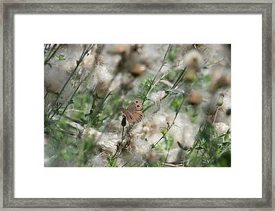 Butterfly In Puffy Seed Heads Framed Print