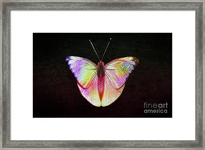 Butterfly In Retro  Framed Print by Manjot Singh Sachdeva