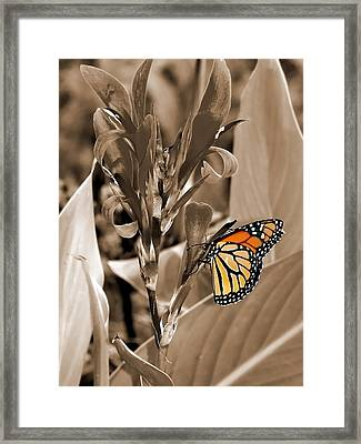 Butterfly In Sepia Framed Print by Lauren Radke