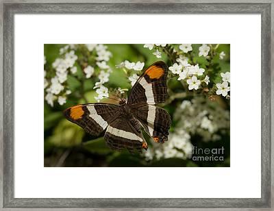 Butterfly In The Garden Framed Print by Ana V Ramirez