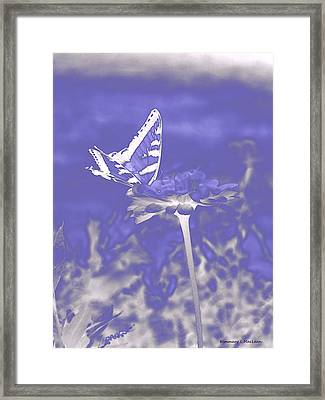 Butterfly In The Mist Framed Print