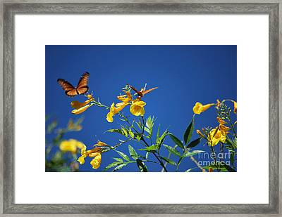 Butterfly In The Sonoran Desert Musuem Framed Print by Donna Greene
