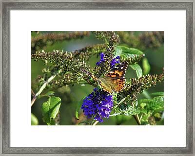 Butterfly Joy Framed Print by JAMART Photography
