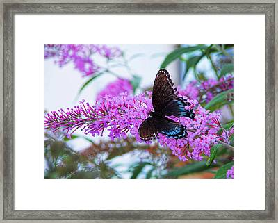 Butterfly Kisses Framed Print by JAMART Photography