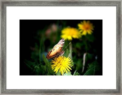 Butterfly Kisses Framed Print by Karen M Scovill