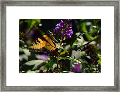 Butterfly Kisses Framed Print by Robyn King