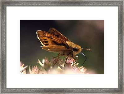 Butterfly-lick Framed Print