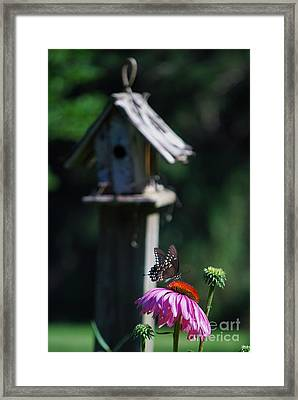 Framed Print featuring the photograph Butterfly by Lila Fisher-Wenzel