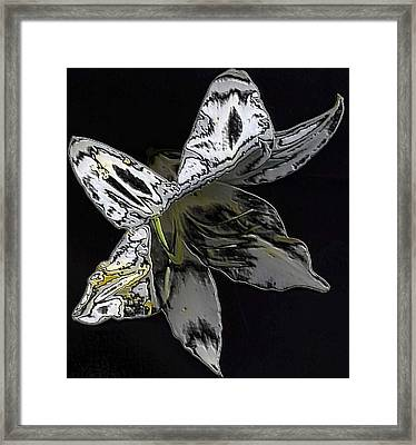 Framed Print featuring the photograph Butterfly Lily by Carolyn Repka