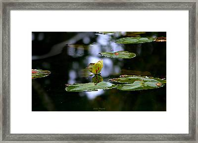 Butterfly Lily Pad Framed Print