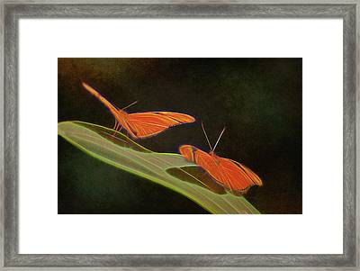 Butterfly Love 1a Framed Print