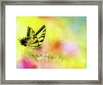 Butterfly Love Framed Print
