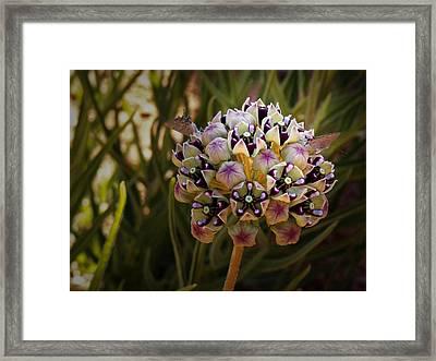 Butterfly Magnet Framed Print