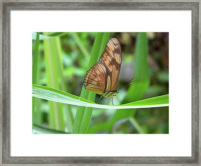 Framed Print featuring the photograph Butterfly by Manuela Constantin