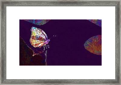Butterfly Matting Macro  Framed Print