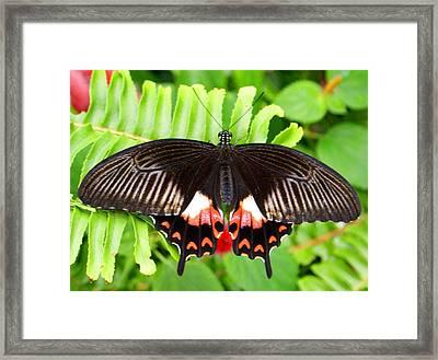 Butterfly Maze Framed Print by Jean Haynes