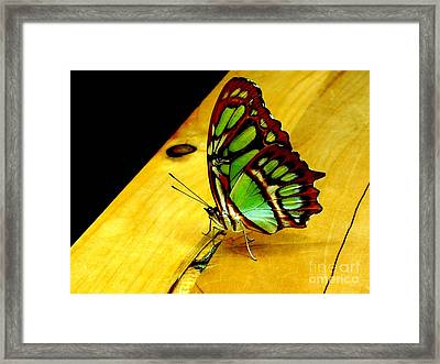 Butterfly Framed Print by Michael Grubb