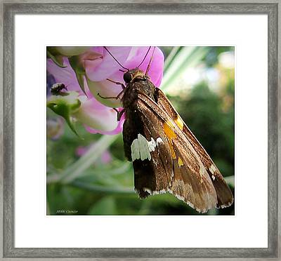 Butterfly Framed Print by Mikki Cucuzzo