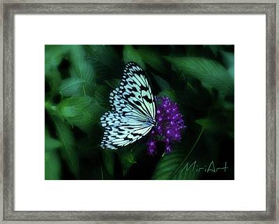 Framed Print featuring the photograph Butterfly by Miriam Shaw