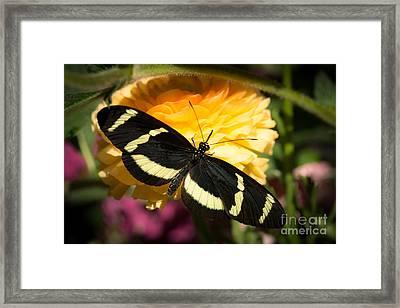 Butterfly Moment Framed Print by Ana V Ramirez