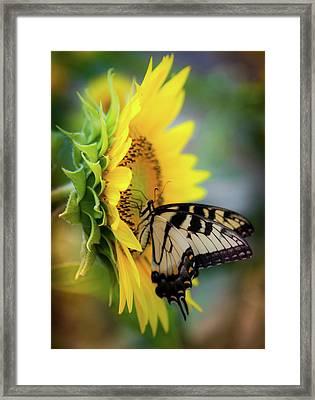 Butterfly Mornings Framed Print