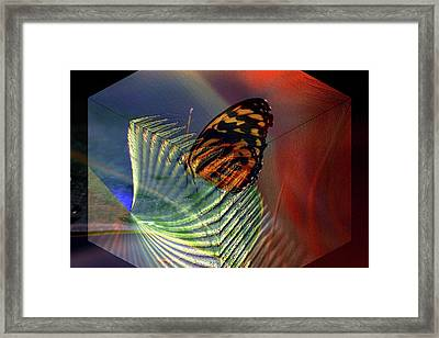 Framed Print featuring the photograph Butterfly Morphing by Irma BACKELANT GALLERIES