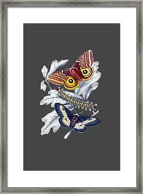 Butterfly Moth T Shirt Design Framed Print by Bellesouth Studio