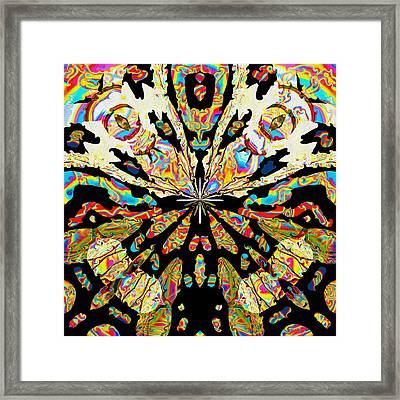 Butterfly Framed Print