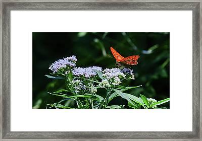 Butterfly On A Flower 2 Framed Print by Anton Popov
