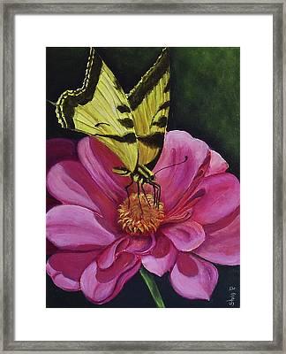 Butterfly On A Pink Daisy Framed Print by Silvia Philippsohn