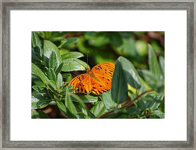 Butterfly On A Sunny Day Framed Print