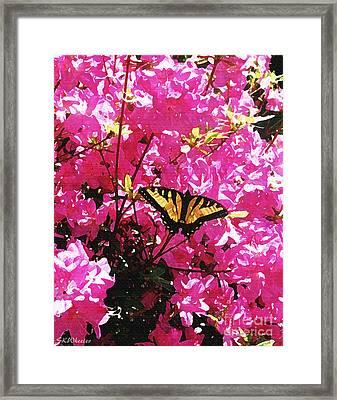 Butterfly On Azalea Framed Print by Sabrina Wheeler