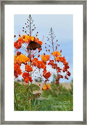 Butterfly On Bird Of Paradise Framed Print