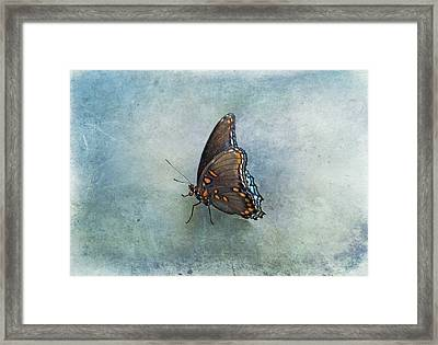 Framed Print featuring the photograph Butterfly On Blue by Sandy Keeton