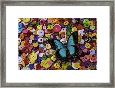 Butterfly On Buttons Framed Print by Garry Gay