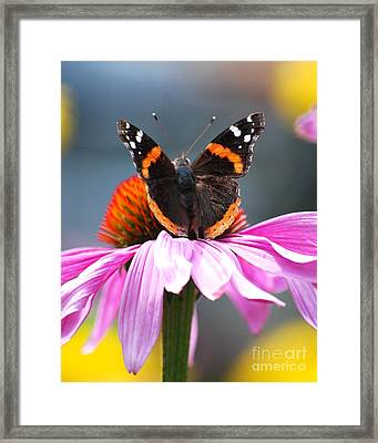 Framed Print featuring the photograph Butterfly On Cone Flower by Lila Fisher-Wenzel
