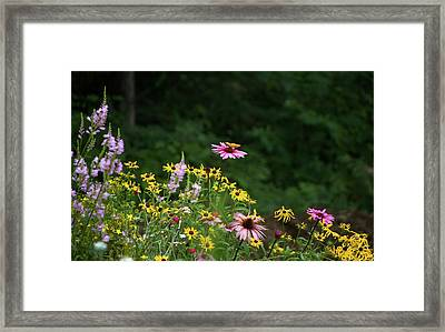 Butterfly On Cone Flower Framed Print by Randi Shenkman