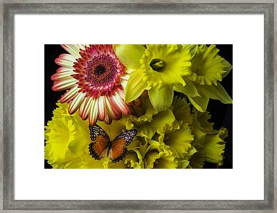 Butterfly On Daffodils Framed Print by Garry Gay