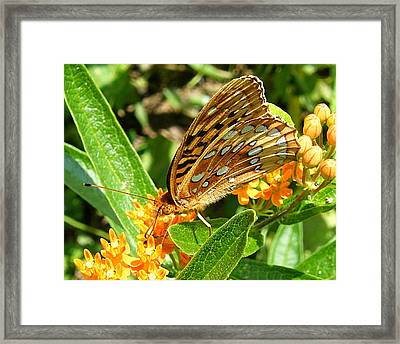Butterfly On Flower Framed Print by Margaret G Calenda
