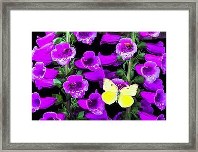 Butterfly On Foxglove Framed Print