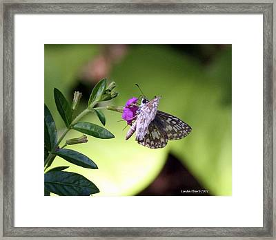 Butterfly On Heather Framed Print by Linda Ebarb