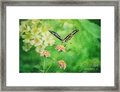 Butterfly On Lantana Montage Framed Print by Toma Caul